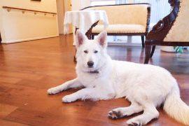 pflegeheim-nortorf-hund